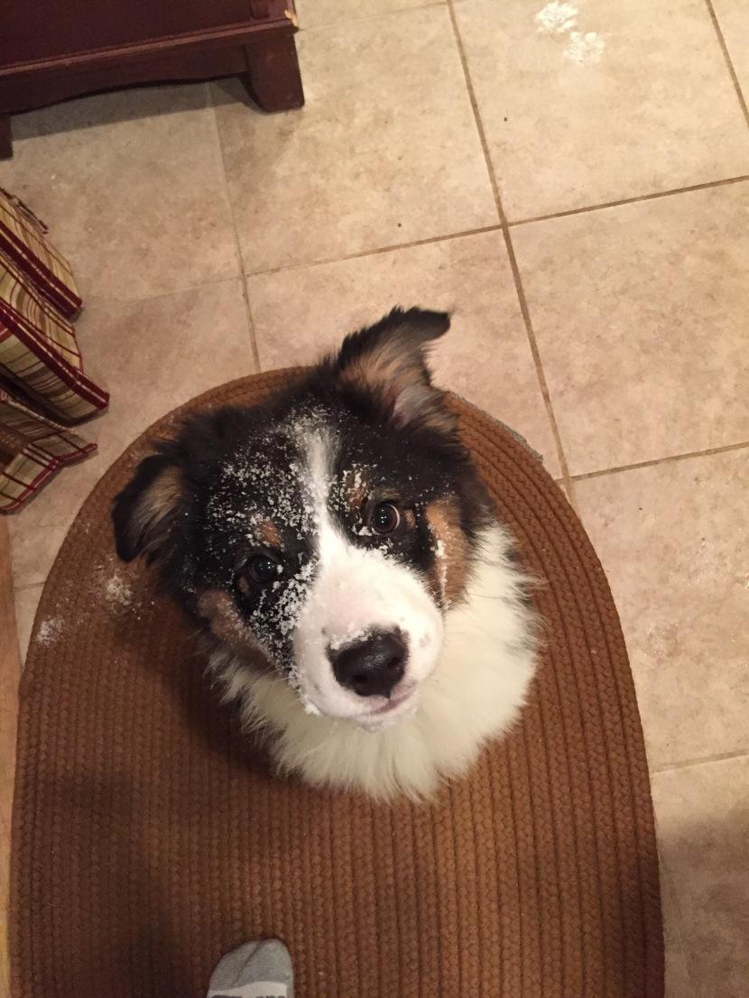 Snowy little bearcub